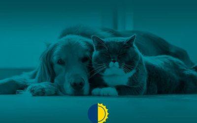 Alergia a animais domésticos? A Homeopatia pode te ajudar!